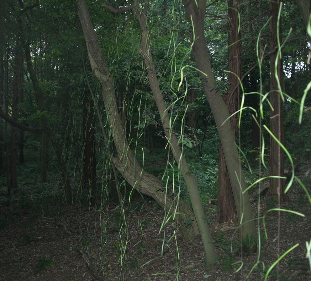 NakayamaExhibition-5195
